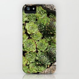 Succulents Lovers iPhone Case