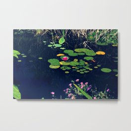 lily in the pond Metal Print
