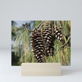 Pinecones  Mini Art Print