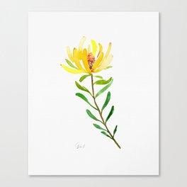 Golden Conebush Canvas Print