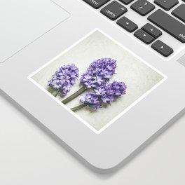 Three Lilac Hyacinth Sticker