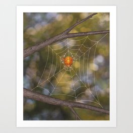 marbled orb weaver on a web Art Print