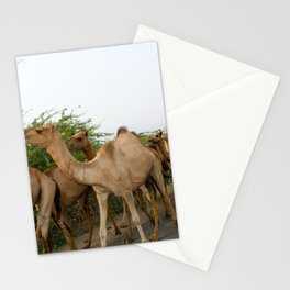 Hump Day Stationery Cards
