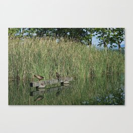 Calm and peace near the lake Canvas Print