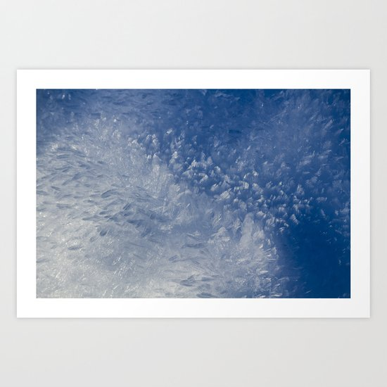 Hoar Frost Art Print