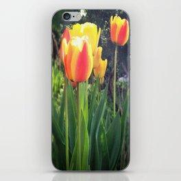 Spring Tulips in Bloom iPhone Skin