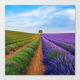 Lavender Province, Valensole, France Canvas Print