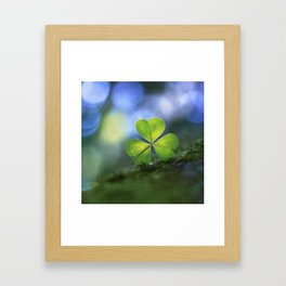 Lonely Wood Sorrel Framed Art Print