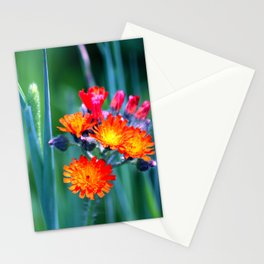 Fire Colors in the Greenery Stationery Cards