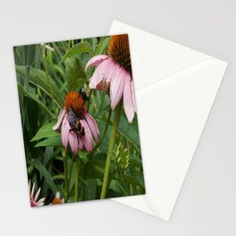 Bumble Bees Coneflower Garden Stationery Cards