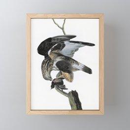 Rough-legged Falcon - John James Audubon Framed Mini Art Print