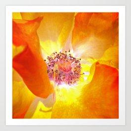 rose macro abstract IV Art Print
