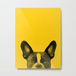 James: Bat Ears Yellow Metal Print