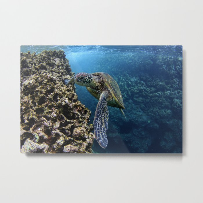 Green Sea Turtle Metal Print