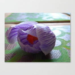 Over Crocus Canvas Print