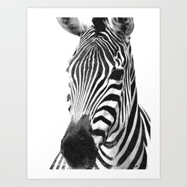Black and white zebra illustration Art Print