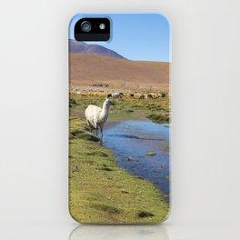 Llamas on an amazing lake nature landscape in South America. lamas. iPhone Case