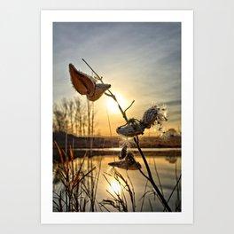 Milkweed Pond Art Print