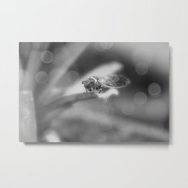 Cicada on Pineapple Tree in Summer Light in Black and White Metal Print