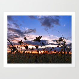Wildflower sunset Art Print