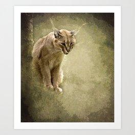Caracal- wild cat Art Print
