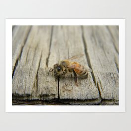 Bee friend Art Print