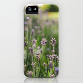 Lavender Fields Forever iPhone Case