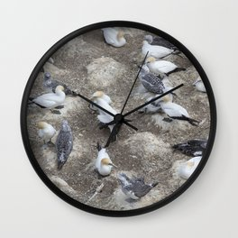 Gannet Colony Wall Clock