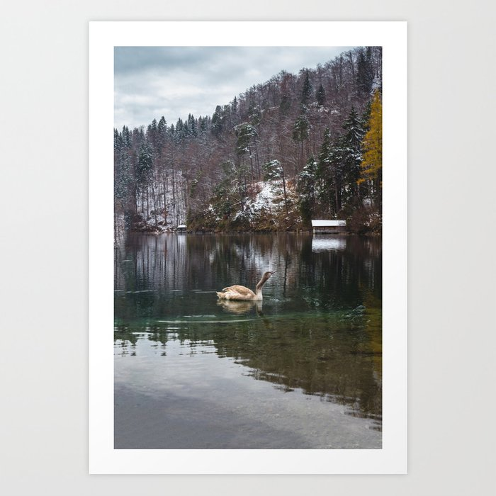 Swans on the Apsee lake, Bavrian alps II Art Print