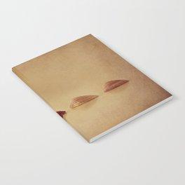 Shells Notebook