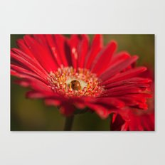 The Gerbera and the Ladybird Canvas Print