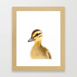 Baby Duck Framed Art Print