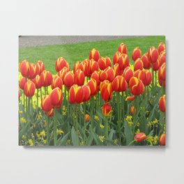 Tulips in Amsterdam Metal Print