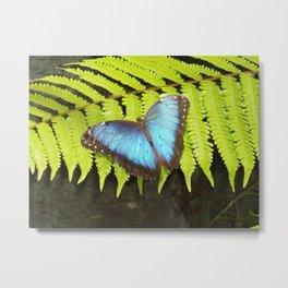 Costa Rican Beauty  Metal Print