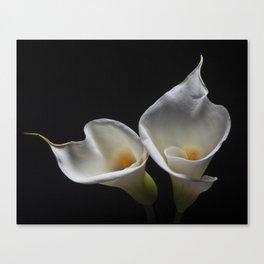 Two Calla Lilies Canvas Print