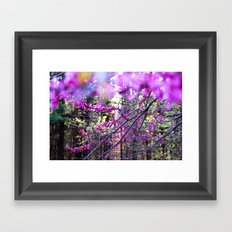 Fuchsia Dream Framed Art Print