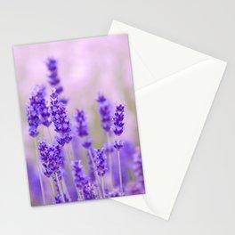 Lavender, lavandula flowers Stationery Cards