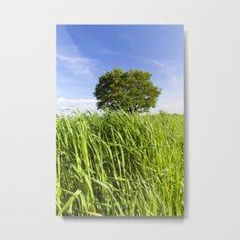 green grass and oak Metal Print