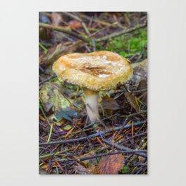 Small Fungi Canvas Print