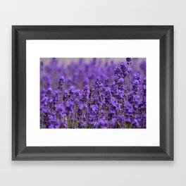 the smell of lavender -c- Framed Art Print