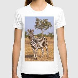 Zebra in Africa, wildlife T-shirt