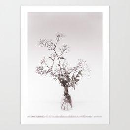 A bouquet of Cow parsley Art Print