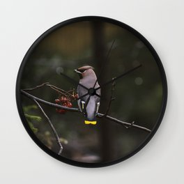 Bohemian waxwing on rowan tree branch Wall Clock