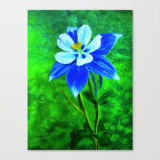 Blue columbine Canvas Print
