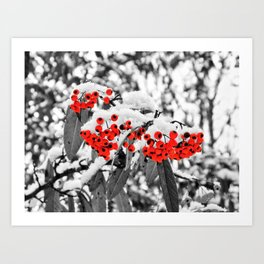 The Berries Art Print