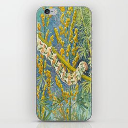 Cucullia Absinthii Caterpillar iPhone Skin