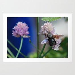 Carpenter Bee 1 Art Print