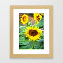 Bowing Sunflowers Framed Art Print
