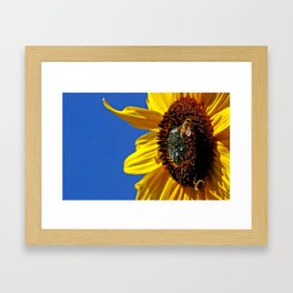 Sunflower with bees Framed Art Print