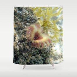 Watercolor Sealife, Split-crown Feather Duster 05, St John, USVI Shower Curtain